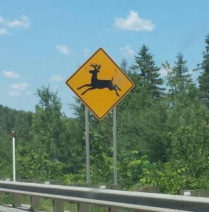 Les cerfs sont dramatiques en Quebec.